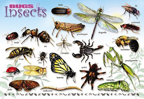 Bugs Insects Amp Arachnids Placemats Philadelphia